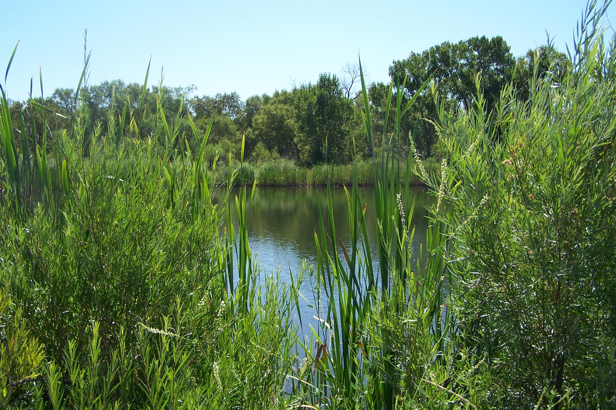 water-through-foliage