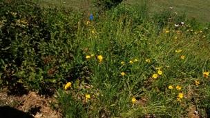prairie flowers 2